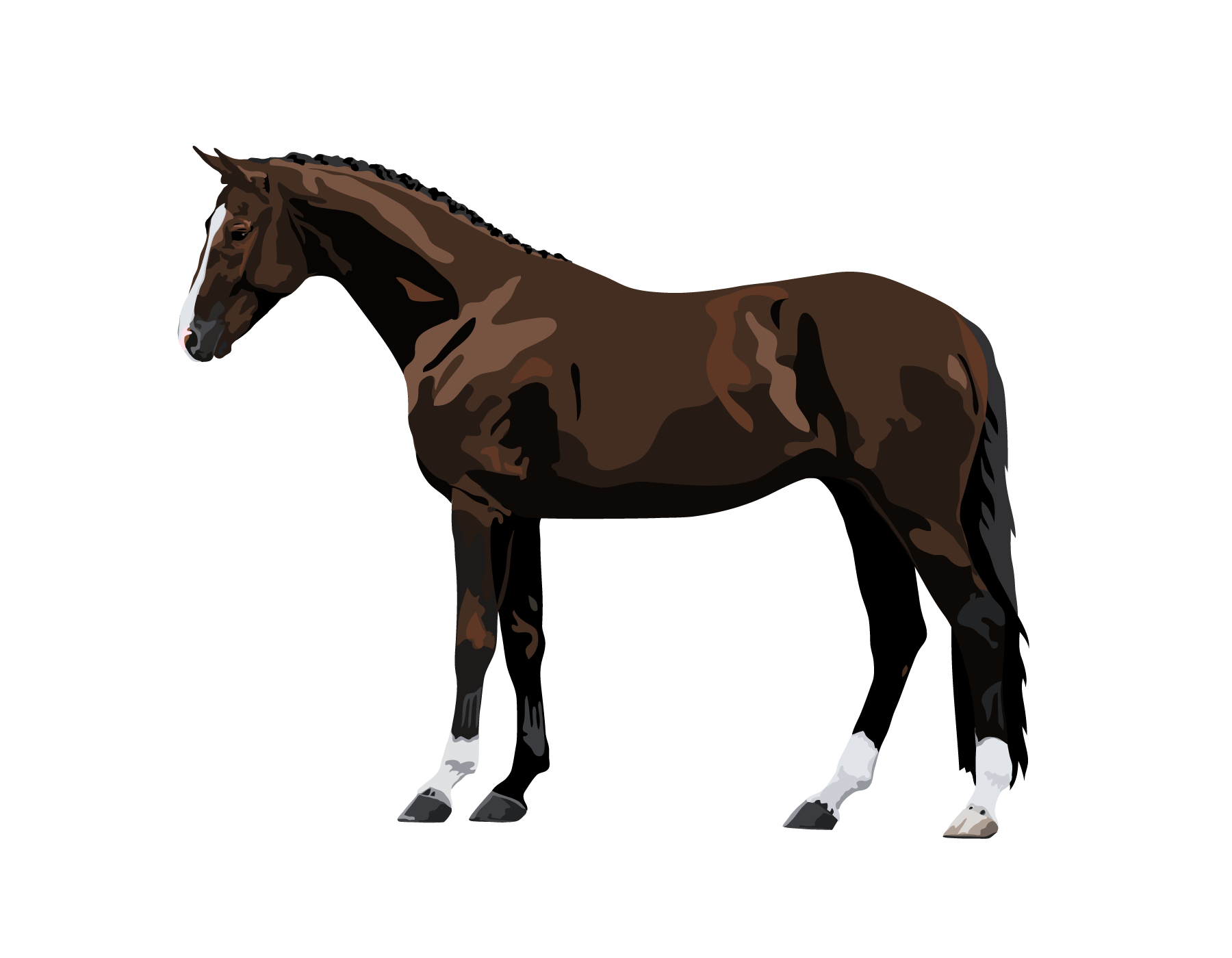 Horse Pony Breeds With Fun Free Quizzes About Horse Breeds