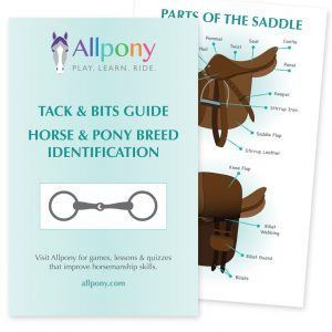 allpony booklet