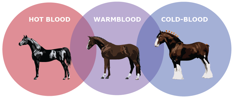 Warmblood Graphic