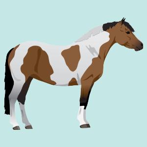 skewbald horse color