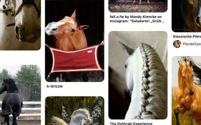 Cool Horse Pics