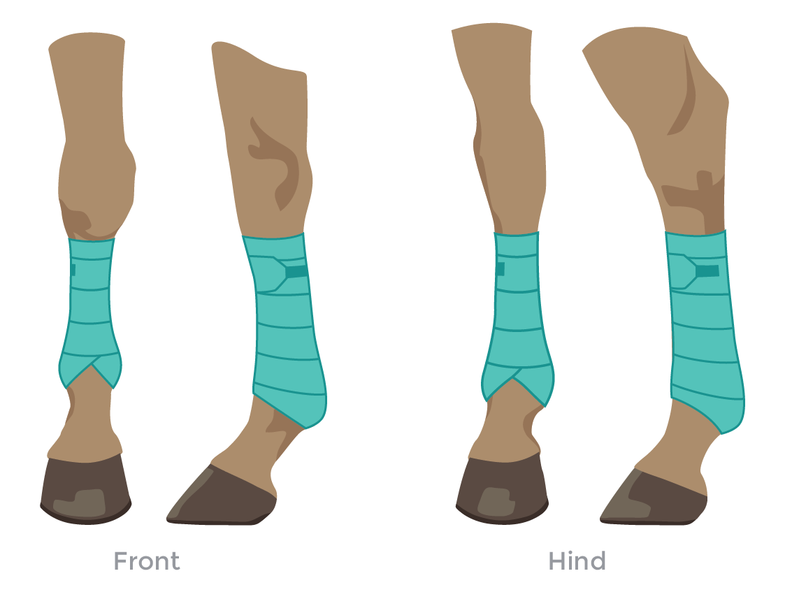 Horse Leg Polo Wrap illustration