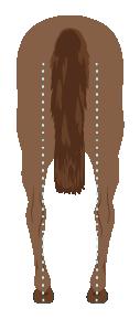 Horse Hind Leg Conformation Bow Legged