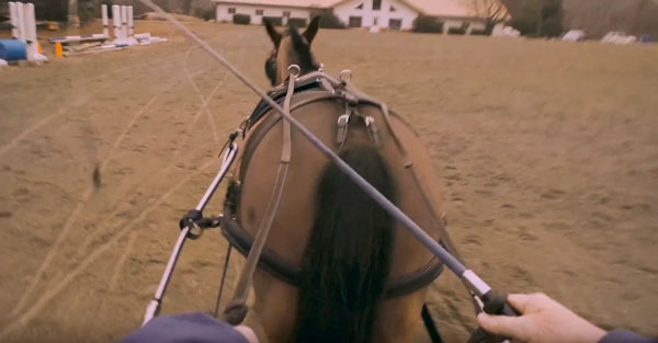 Allpony interview combined driving horse carriage