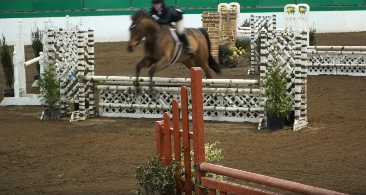 Allpony hunter horses ponies video