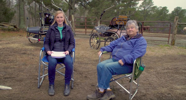 Allpony interview combined driving horse instructor gloria susan