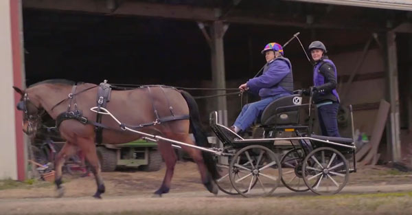 Allpony interview combined driving horse instructor